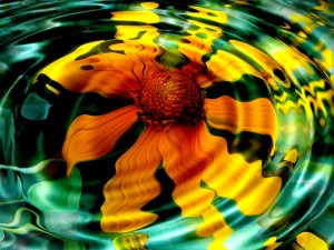 sunflower-in-water-HD_wallpapers