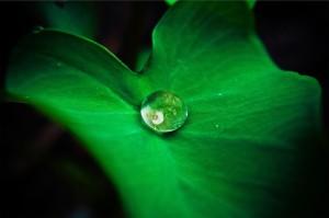 leaf-642115_640